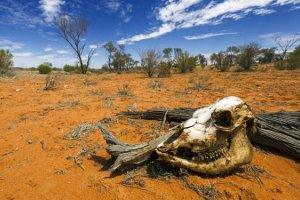 Pic de chaleur en Australie : 47°C à l'ombre, les routes fondent au soleil