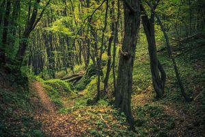 La forêt d'Aokigahara: pourquoi les Japonais s'y cachent pour mourir?