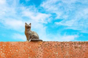 La Romieu un village où les chats sont à l'honneur en France