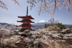 viajar japon floracion cerezo primavera sakura hanami