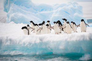 Emploi : Partez vivre avec les manchots en Antartique !