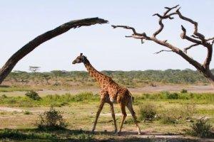 Un lodge en Tanzanie pour s'évader et renouer avec la nature