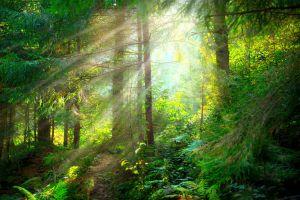 Une nouvelle forêt de 1000 hectares aux portes de Paris