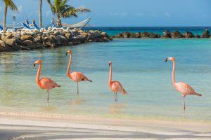 Aux Bahamas, un hôtel recherche quelqu'un pour s'occuper des flamants roses