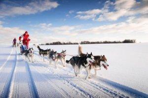 20 activités pour Laponie