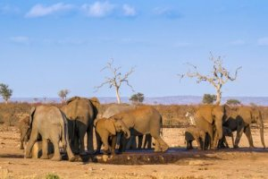 La moitié des espèces pourraient disparaître d'ici 2080 dans certaines zones du monde