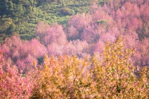 Printemps en Chine : un spectacle sublime