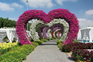 Dubai Miracle Garden giardino di fiori più grande al mondo