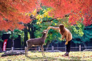In Japan warnt Park vor bissigen Bambis