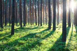 Une forêt domaniale va voir le jour en Ile de France