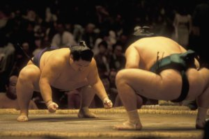 Comme au Japon, on pratique le sumo à Paris
