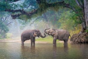 Thaïlande : deux éléphants meurent éléctrocutés