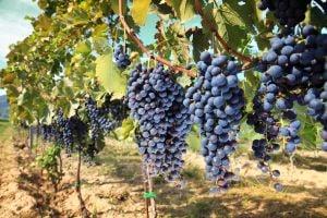 Un vigneron lance le premier wine truck en Alsace