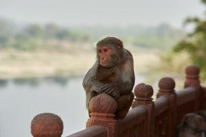 Des vacanciers français se sont fait agresser par des macaques