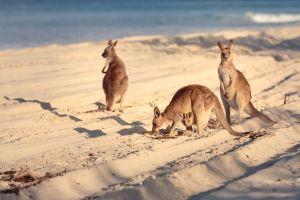 maravillas naturales  Australia
