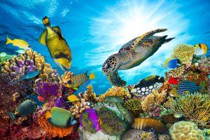 Wow, Diese sind die schönsten Korallenriffe der Welt