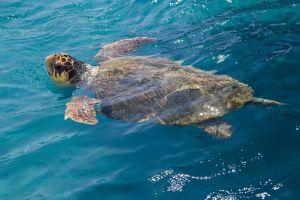 L'aquarium de la Rochelle relâche 6 tortues à la mer