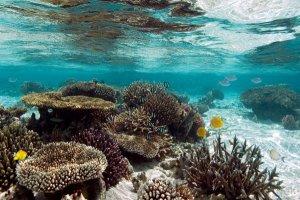 top six barriere coralline belle mondo secondo WWF