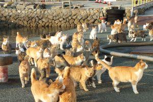 Willkommen auf der Insel der Katzen