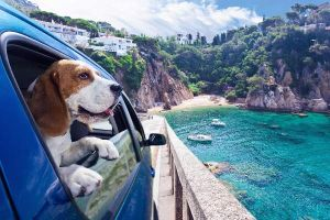 Urlaub mit Hund: Mission möglich!