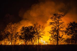 Sweden in the Middle of its Worst Forest Fires