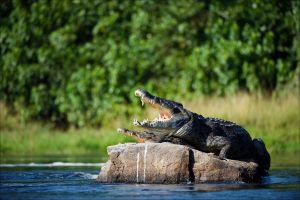 Un crocodile de 2 mètres aperçu sur les plages thaïlandaise