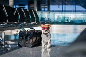 Un chien ouvre la soute à bagages en plein vol