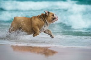 La Ciotat autorise les chiens à la plage