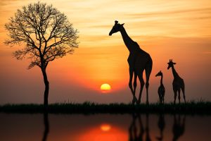 Cinco razones para visitar Sudáfrica