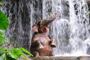 Schwimmen mit Elefanten macht wirklich Spaß
