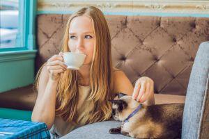 turismo animalista españa cafe de gatos