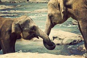 Thailandia Elephant Nature Park