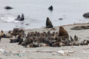 Une étrange créature s'est échouée sur les côtes russes