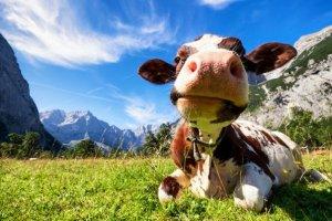 Le changement climatique tue 50 animaux dans les Hautes-Alpes