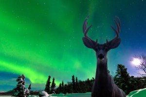 8 places to see the Northern Lights like never before