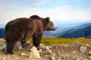 Un Nantais se retrouve face à face avec une Ourse dans les Pyrénées