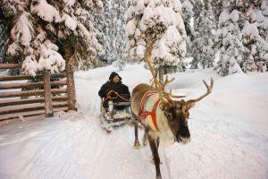 La Laponie finlandaise recherche des travailleurs hivernaux !