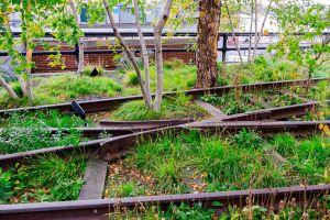 a walk along New York City's hanging gardens