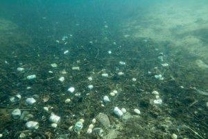 """"""" The Ocean Cleanup """" a pris la mer pour nettoyer les océans"""