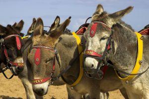 10 Touristenattraktionen, die oft leider purer Tiermissbrauch sind.