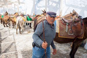 Les touristes en surpoids interdits de monter sur les ânes en Grèce !