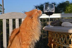 États-Unis : grâce au vin pour chat, on peut dorénavant trinquer avec minou !