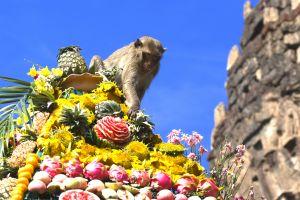 En Thaïlande, un festival propose un buffet XXL pour des singes