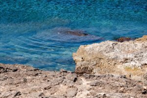 Descubre Es Carnatge: un pulmón verde en la bahía de Palma de Mallorca