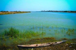 Des centaines de milliers de carpes retrouvées mortes dans l'Euphrate
