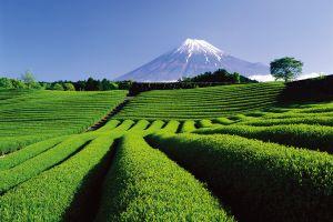 Admirez les sublimes paysages de Shizuoka au Japon