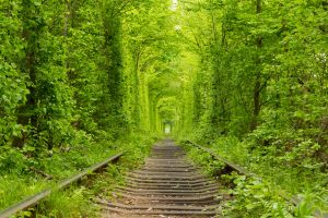 Tunnel of Love: is Ukraine home to the most romantic place on Earth?