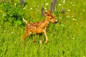 Un juge états-unien ordonne à un braconnier de visionner le film Bambi