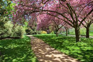 """Londres : bientôt première ville """"parc national"""" du monde ?"""