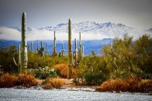 Le désert de l'Arizona sous la neige